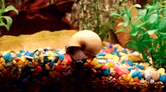 Beautiful snails in the aquarium Stock Footage