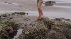 Young boy looking at tide pool. Shot on RED EPIC for high quality 4K, UHD, Ultra - stock footage