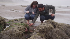 Couple looking at tide pool. Shot on RED EPIC for high quality 4K, UHD, Ultra HD - stock footage
