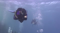 Sea fish. Sea View. Underwater video. Diver Stock Footage