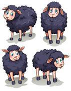 Four sheeps Piirros