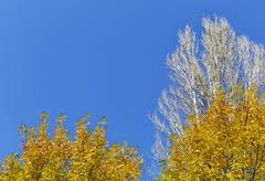 Deciduous trees Stock Photos