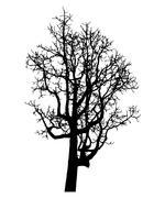 vector black silhouette of a bare tree - stock illustration