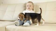 Child with beagle puppy sitting on white sofa Stock Footage
