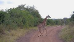 Giraffe running across the dirt road in Africa Stock Footage