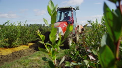 Tractor spraying blueberry field. Shot on RED EPIC for high quality 4K, UHD, - stock footage