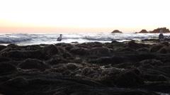 Malibu Tide Pools Closeup rocks Egret walk-thru Stock Footage