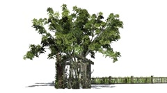 Tree in old Shed, fence with vine Stock Footage