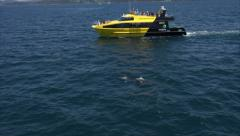 Tour boat watches bottlenose dolphins, Bay of Islands, New Zealand Stock Footage