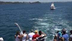 Stock Video Footage of Tourists in tour boat watch bottlenose dolphins jump in the air, Bay of Islan