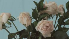 4K - White Roses rotating on blue background Stock Footage