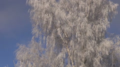 beautiful new year christmas  time winter hoarfrost  on birch tree - stock footage