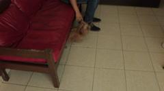 Adorable Dog Shih Tzu Hides Under Sofa at Veterinary Doctor Visit Stock Footage