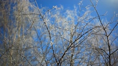 Snowy birch branches in winter sunny day against clear blue Winter sky. HD Stock Footage