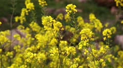 Small yellow flowers bush on a wind Stock Footage