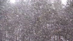 Snowfall in forest 2 Stock Footage