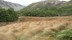 Wind in Tussock Grass Stock Footage