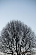 Bare winter tree against blue sky - stock photo
