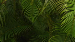 Tropical palm branches, Costa Rica - stock footage