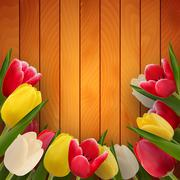 Tulips on boards - stock illustration