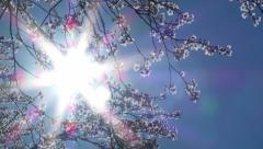 Sun Shining on Blossoming Tree Stock Footage