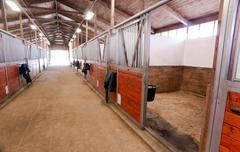 Horse Barn Animal Sport Paddock Equestrian Ranch Racing Stable Stock Photos