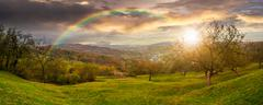 panorama of apple orchard on hillside at sunset - stock photo
