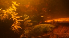 The moving plants and the moving fish Stock Footage