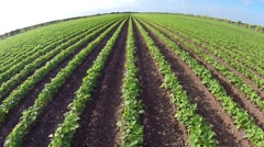 Aerial of crops and farmland Stock Footage
