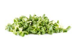 Watercress salad Stock Photos