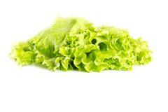 Fresh green lettuce Stock Photos