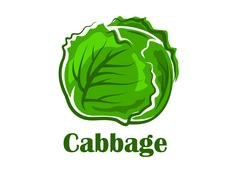 Cabbage vegetable with crunchy green leaves Stock Illustration