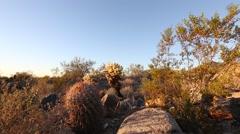 Camera slide through a sonoran desert environment Stock Footage