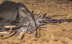 Remains of campfire on sandy beach Stock Photos