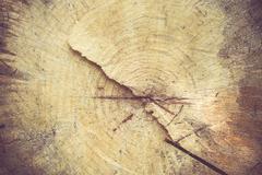 Log surface texture background Stock Photos