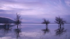 Trees in the lake with beautiful clouds Stock Footage