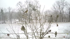 Super slow motion zoom in on female cardinal bird. Stock Footage