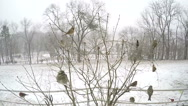 Stock Video Footage of Super slow motion zoom in on female cardinal bird.