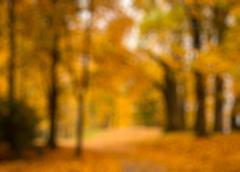 Defocused blurred autum background Stock Photos