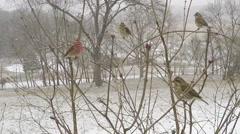 Close up multiple varieties of Missouri winter birds coming and going Stock Footage