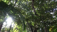 4k Sunlight glimmer panning between tropic treetops - stock footage