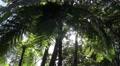 4k Sunlight glimmer panning between tropic treetops 4k or 4k+ Resolution