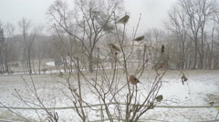 4K various Missouri winter birds on tree during snow storm. Stock Footage