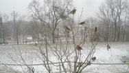Stock Video Footage of 4K various Missouri winter birds on tree during snow storm.