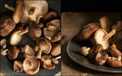 Compilation of images of Fresh shiitake mushrooms in moody natural light sett Stock Photos