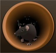 Rats - stock illustration