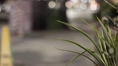 Plants in public location Stock Footage