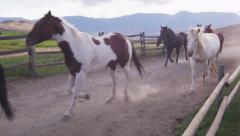 Slow Motion - Horses Trotting 02 Stock Footage