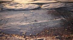 Ants on stone floor Stock Footage