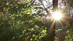 Sunshine through trees Stock Footage